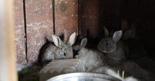 灰色野兔在他们的木房子录影4k里 股票视频