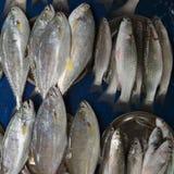 灰色颜色许多新鲜的海鱼在两行的在一块蓝色油布说谎:在左边在堆的有一条灰色大鱼金枪鱼,在r 免版税库存图片