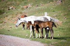 灰色马和两只驹 免版税库存图片