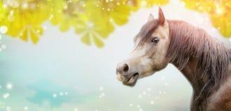 灰色马美好的马头在夏天或秋天叶子和蓝天的背景 免版税库存图片