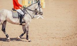 灰色驯马马和车手在执行在跳跃赛的深蓝夹克 免版税库存照片
