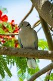 灰色鸽子坐大树枝在白天 免版税库存图片