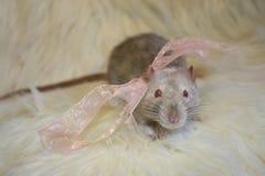 灰色鼠领带 免版税库存图片
