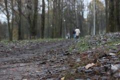 灰色,黑暗的atumn方式在公园 很远人落叶剪影在脚下的在雨以后 库存图片