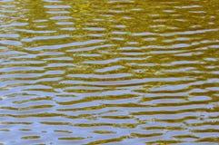 灰色绿的水起波纹背景 免版税库存图片