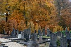灰色cemetry下面金子色的秋天树 免版税库存照片