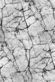 灰色maerble -无缝的纹理 免版税库存图片