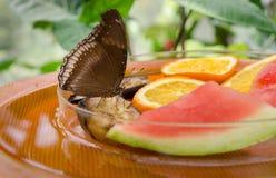 灰蝶科是蝴蝶第二大家庭  Mainau海岛 库存图片