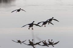 灰雁分析服务公司在湖的分析服务公司着陆 图库摄影