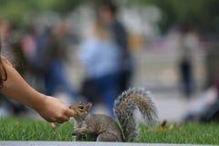 灰鼠和女孩 免版税库存图片