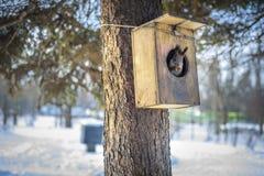 灰鼠在树上小屋里 免版税图库摄影