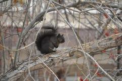 灰鼠坐树枝 免版税图库摄影