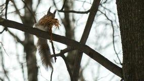灰鼠坐树 免版税库存图片