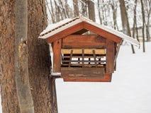 灰鼠的饲养者在有鸟的保护的公园 库存照片