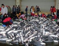 从灰鲻鱼鱼的工作者收获新鲜的獐鹿 图库摄影