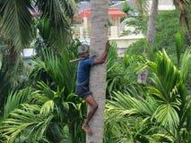灵巧的人上升的棕榈树 免版税库存图片