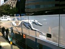 灵狮公共汽车商标 免版税库存图片