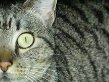 灵魂猫 免版税库存照片