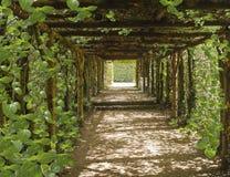灵魂的旅途 美丽的隧道由树做成 免版税库存图片