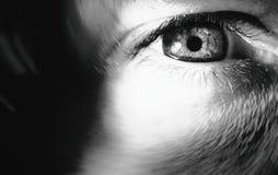 灵魂的窗口 免版税库存图片