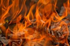 灼烧的假冒的货币 免版税库存照片