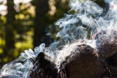 灼烧的木柴做各种各样的烟移动形状 库存图片
