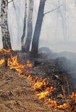 灼烧的森林 库存图片