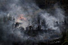 灼烧的森林 图库摄影