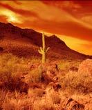 灼烧的沙漠 免版税库存照片