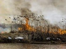 灼烧的火通过在河岸的干草传播,并且烟进入灰色天空 免版税库存图片
