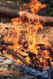 灼烧的火 在灼烧的火森林纹理的篝火烧伤  烹调的篝火在烧干燥分支的森林里 T 免版税库存图片