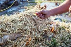 灼烧的猪头发与在宰割前的干燥秸杆 图库摄影