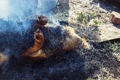 灼烧的猪头发与在宰割前的干燥秸杆 库存照片