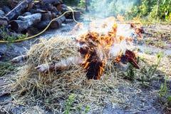 灼烧的猪头发与干燥秸杆 库存照片