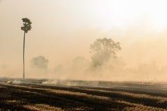 灼烧的米秸杆 库存照片
