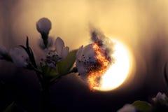 灼烧的花 库存图片