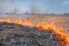 灼烧的草 库存照片