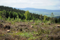 灾难在森林里 免版税图库摄影