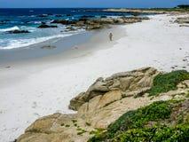 点乔, Pebble海滩加州 图库摄影