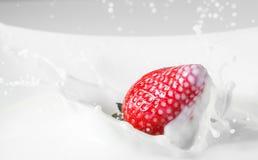 点心:落在牛奶的草莓与飞溅 红色白色 免版税库存照片