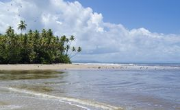 点根值东海岸特立尼达 免版税库存照片