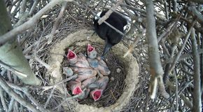 12点活字12点活字 鹊的巢 免版税库存照片