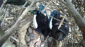 12点活字12点活字 鹊的巢 图库摄影
