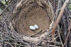 12点活字12点活字 鹊的巢 免版税库存图片