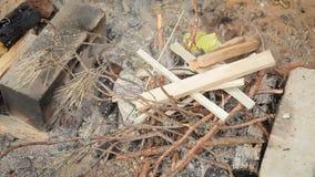 点燃从分支和叶子的火在一个干燥森林里 股票录像