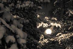 点燃晚上冬天 库存照片