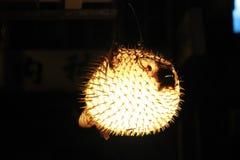 点燃街道的河豚灯笼 免版税库存图片
