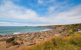 点的在圣西梅昂北部的Piedras Blancas海象殖民地加利福尼亚中央海岸的  免版税图库摄影