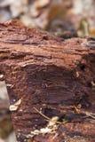 烂掉下落的树干 免版税库存照片