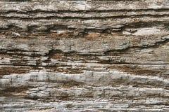 烂掉的木头 免版税图库摄影